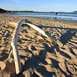 Driftwood on the sand at Popham Beach State Park in Phippsburg, Maine.