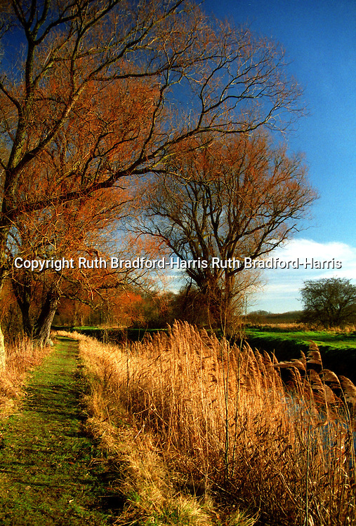 Vibrant Autumnal colours on a gloriously sunny day in mid-Winter along the banks of the River Slea, near Sleaford, Lincolnshire. <br />