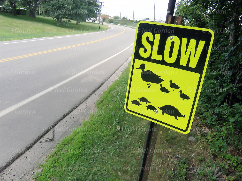 Traffic sign on back road with sense of humor, Slow down for ducks and turtles
