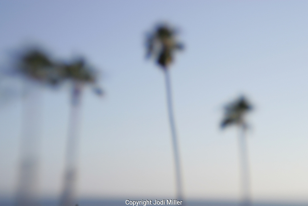 blurry palm trees