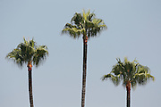 LOS ANGELES, CA - AUGUST 10:  Palm trees wave in the breeze beyond left field at the Los Angeles Dodgers game against the Philadelphia Phillies on August 10, 2011 at Dodger Stadium in Los Angeles, California. The Phillies won the game 9-8. (Photo by Paul Spinelli/MLB Photos via Getty Images)