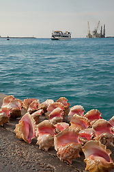 Conch shells for sale on Prince George Wharf in Nassau, Bahamas.