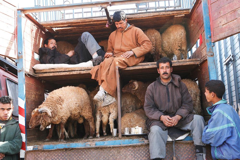 Marrakech, Maroc. 20 Decembre 2007..Le marche aux moutons avant Aid El Kebir..Aid El Kebir est une des fetes les plus importantes de l'Islam...Marrakesh, Morocco. December 20th 2007..The sheep market the day before Eid Al-Adha. .Eid Al-Adha is one of the most important celebrations in the Islam traditions.