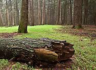 Alan Seeger Natural Area