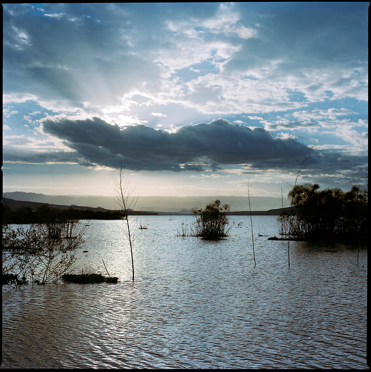 Kenya. Lake Naivasha. Water from the lake is used to water the Oserian Farms who sell Fairtrade flowers to European supermarket's throughout Europe.