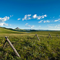 spring flowers and green grass erupt along the prarie interface with the rocky mountains south of augusta, montana, haystack butte is in the middle ground, russel country, montana, usa, russell
