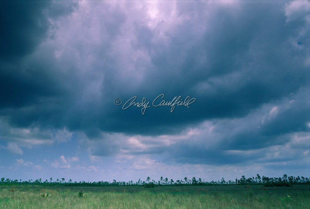 Summer tropical rain clouds form over Everglades NP, Florida USA