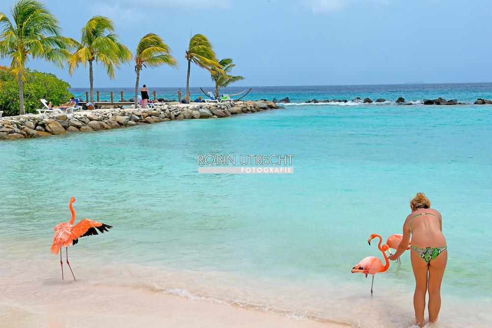 ARUBA - Oranjestad  vakantie gangers op het strand van aruba met flamingos genieten van het mooie eiland en de zee . COPYRIGHT ROBIN UTRECHT