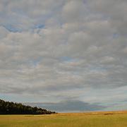Summer Sky, Norfolk
