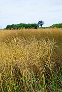 Paysages du G&acirc;tinais, France.<br /> Ce parc situ&eacute; au sud de l'Ile de France s'&eacute;tend &agrave; travers les d&eacute;partements du Loiret, de la Seine et Marne, de l'Essonne et de l'Yonne.