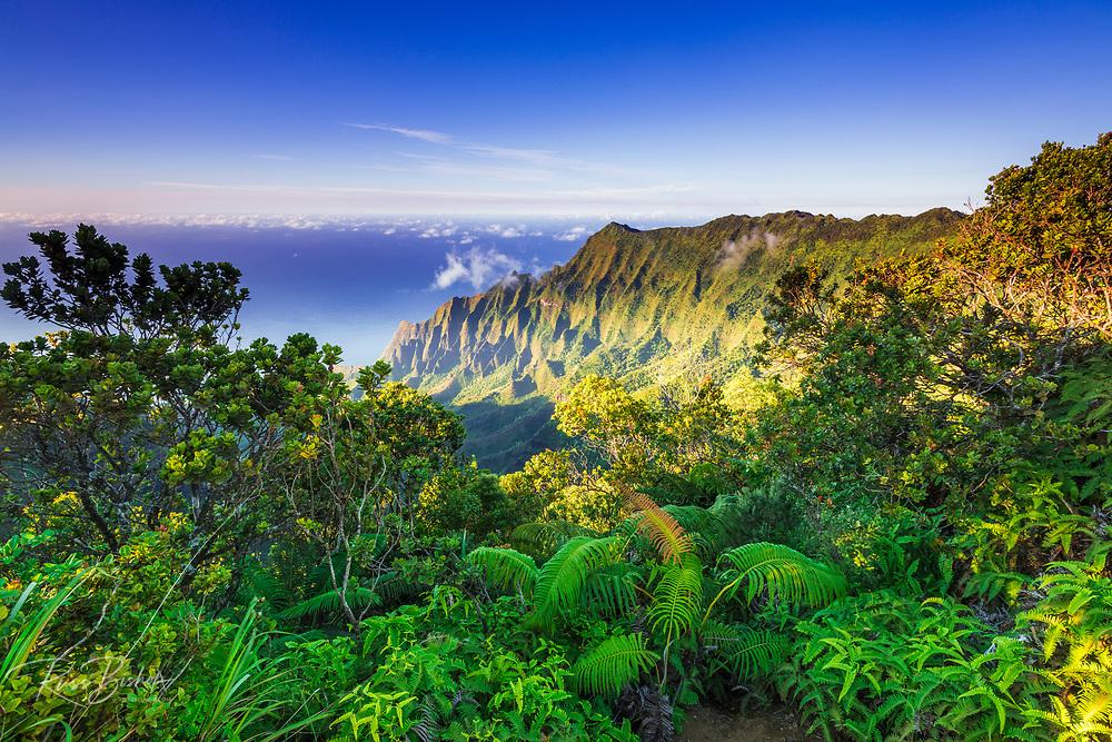 Kalalau Valley and the Na Pali Coast from the Pihea Trail,  Kokee State Park, Kauai, Hawaii USA