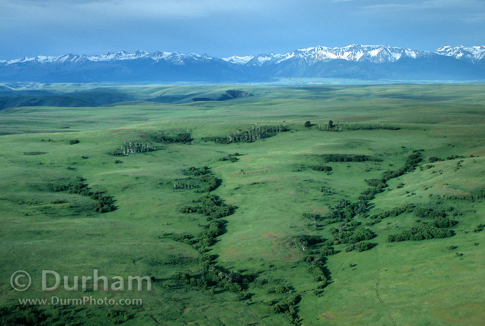 An aerial view across grassland, aspen groves, and hawthorne shrubs toward the wallowa mountain range in NE Oregon. This land is part of The Nature Conservancy's Zumwalt Prairie Preserve. Zumwalt Prairie is the largest tract of intact native bunchgrass prairie left in North America.
