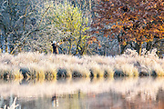 UNITED KINGDOM, London: 29 November 2016 A walker takes a picture amongst a frosty yet colourful Richmond Park this morning as temperatures plummeted to -7C last night. Rick Findler / Story Picture Agency