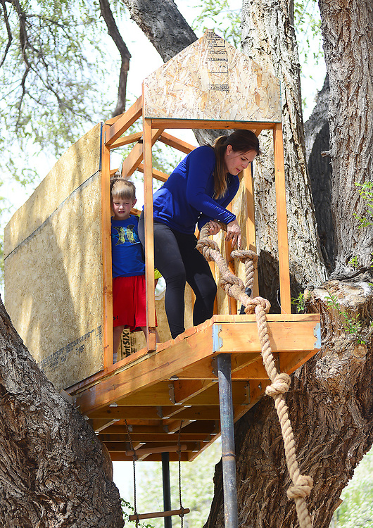 apl033017f/RIO RANCHO/pierre-louis/JOURNAL 033017<br /> Sophia Foutz,, and her 5 year-old son Henry Foutz,, work on a tree house on an old elm  in front of their Corrales home .Photographed  on Thursday March 30, 2017. .Adolphe Pierre-Louis/JOURNAL