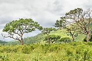 Kwazulu natal, South Africa.