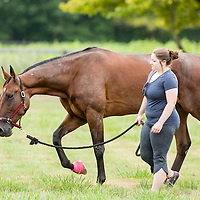 LADY SHADOW - Trot Magazine