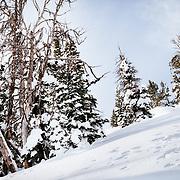 Rachel Burkes finds powder in the Teton backcountry.