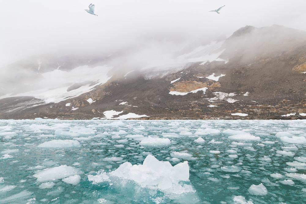 Birds fly overhead in the iceberg choked forebay of actively calving Paierlbreen, Hornsund, Svalbard.