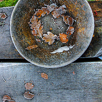 A wooden bowl outdoors in winter on wooden bench with frost and oak leaves