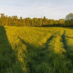 A hay field at Emery Farm in Durham, New Hampshire.