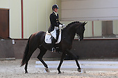 Young Dressage Talent