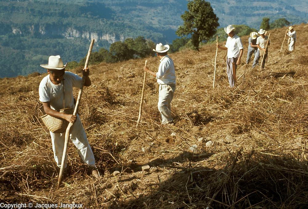 Mexico, Puebla State, Sierra de Puebla: men sowing maize using digging sticks.