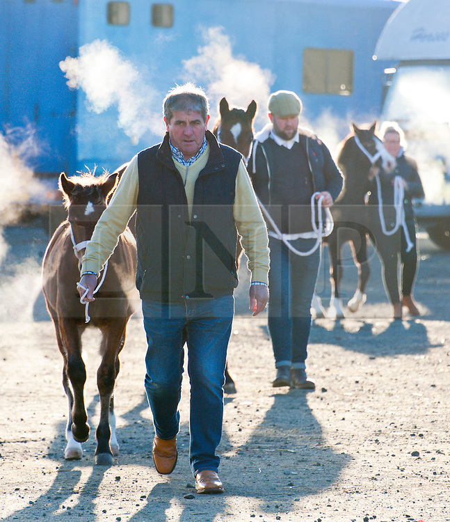 © Licensed to London News Pictures. 27/10/2018. Builth Wells, Powys, Wales, UK. Cold start as Welsh Cob enthusiasts prepare for start of the sale at 10.30am on the second day of the 55th Autumn Cob Sale - the largest sale in the World of registered Welsh Cobs Section D, Welsh Ponies of Cob Type Section C and their Part Breds. The sale, held by Brightwells auctioneers, takes place over three days at The Royal Welsh Showground in Builth Wells, Powys, UK, attracting an audience of thousands of Welsh Cob enthusiasts worldwide. Photo credit: Graham M. Lawrence/LNP