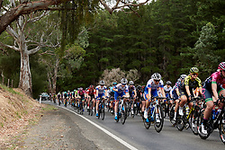 FDJ Nouvelle Aquitaine Futuroscope in the bunch on the charge into Kangarzilla at Stage 1 of 2020 Santos Women's Tour Down Under, a 116.3 km road race from Hahndorf to Macclesfield, Australia on January 16, 2020. Photo by Sean Robinson/velofocus.com