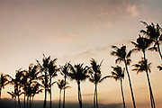 The Big Island, Hawaii.