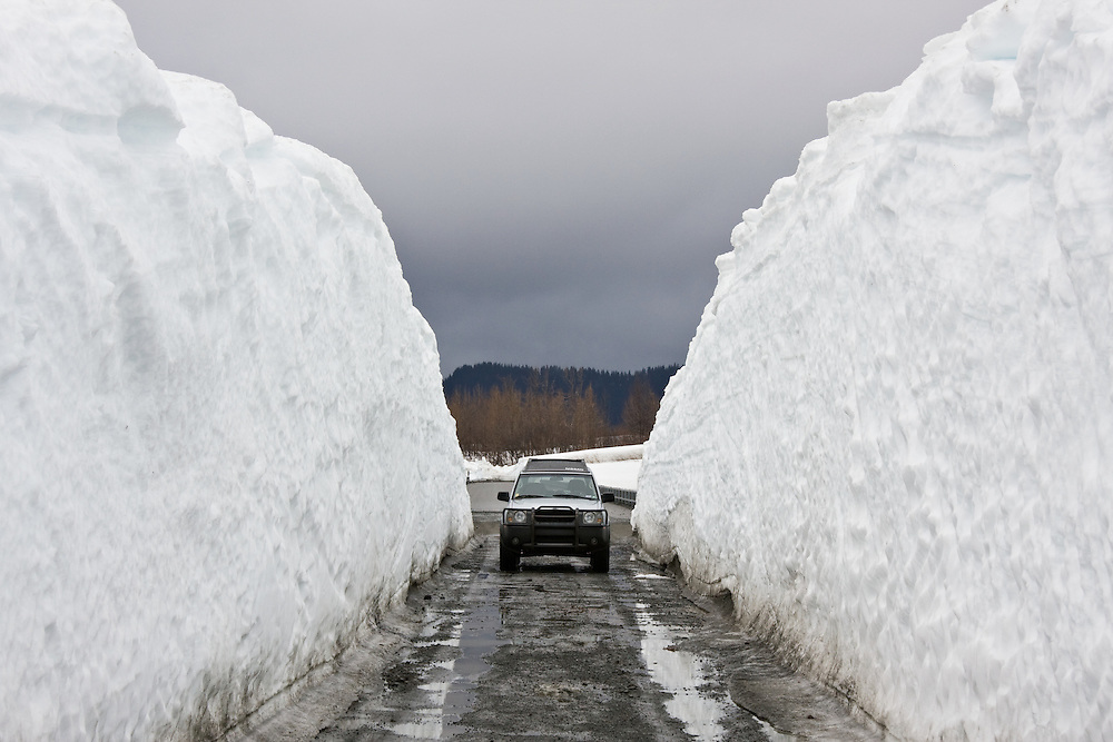 Snowdrifts cleared in spring to open up  the Copper River Highway in the Copper River Delta to traffic dwarf an SUV. PR.
