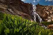 Corn lilies and waterfall below Nydiver Lake in the Ansel Adams Wilderness. High Sierra backpacking trip to Garnet Lake and Nydiver Lake in the Ansel Adams Wilderness out of Devil's Postpile national monument 2017.