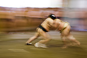 Professional Sumo Team (Musahigawa Beya) practicing in Tokyo, Japan. Wrestlers of the Professional Sumo Team (Musahigawa Beya) go through practice routines at their stable in Tokyo, Japan.