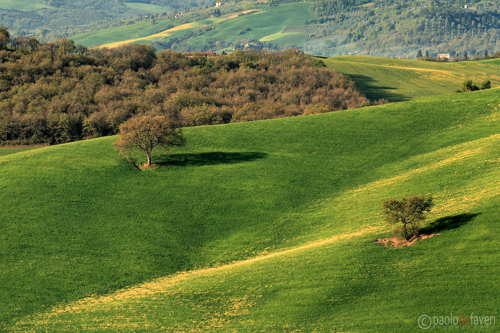 Two lonely trees in the fields. An early mnorning view of the country side between Pienza and San Quirico d'Orcia in Val d'Orcia, Tuscany, right at the feet of Mount Amiata, one of the largest and tallest quiescient volcanos of Italy.