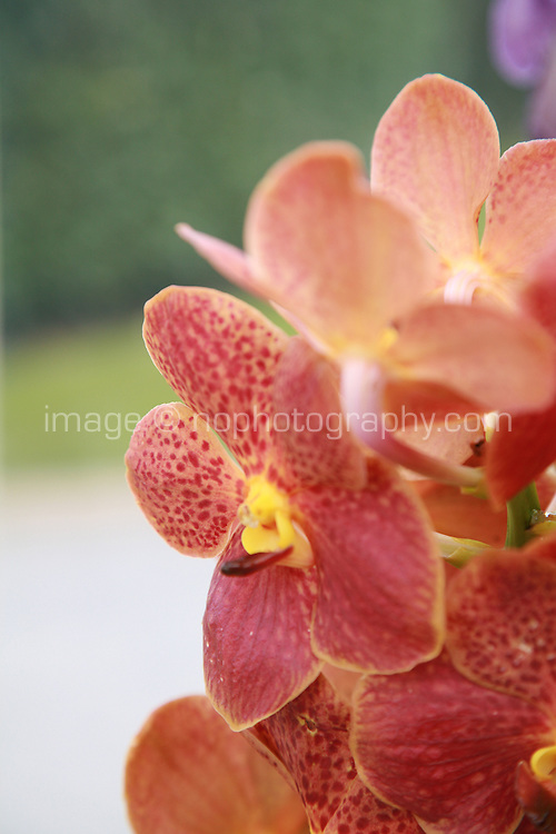 Close up of red and yellow Orchid plant flowers. Photography by Doreen Kennedy