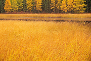 Marsh and larches, Near Raith, Ontario, Canada
