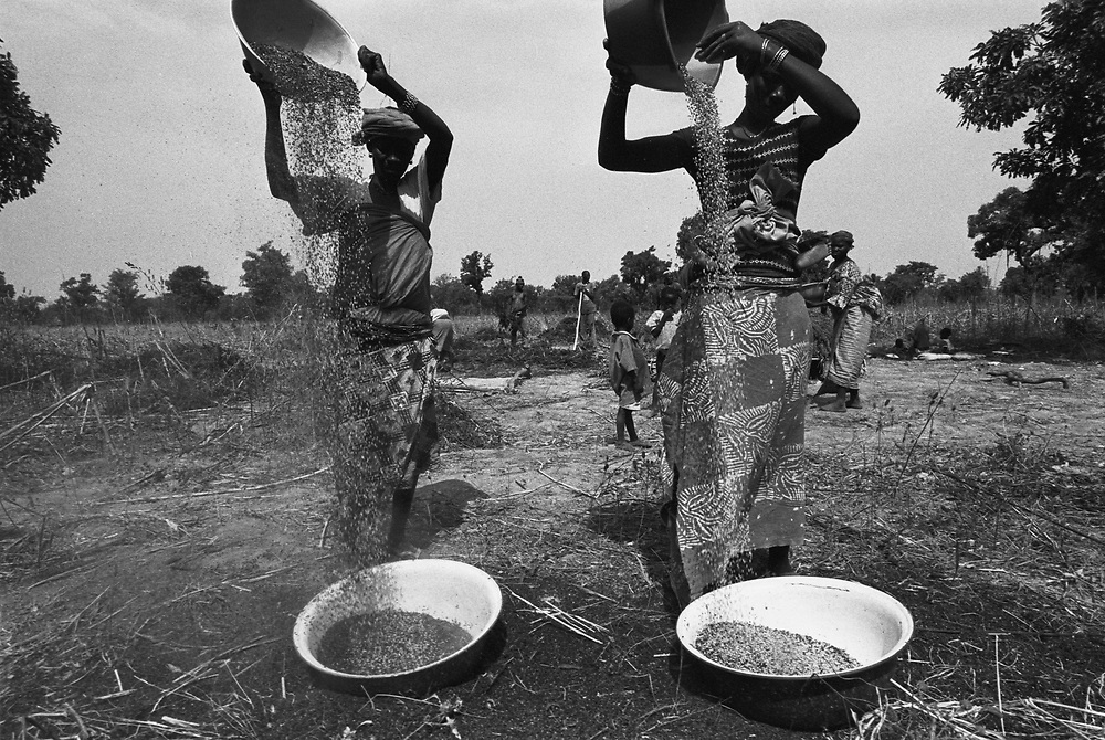 Women sift sorghum grain. The family of Watara Abdulaye formerly cultivated cotton, but can no longer break even so he changed to sorghum, corn and other grains..Karankasso Vigué, Burkina Faso. 14 December 2003..Photo © J.B. Russell