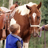 horses and horseback riding