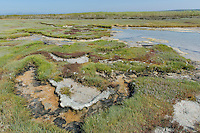 Gielbeck Salt Marshes, West Coast National Park, Western Cape, South Africa