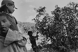 In the demilitarized zone along the 17th parallel, where most of the defoliant Agent Orange was sprayed. More than 30 years after the end of the Vietnam War, parts of the country are still contaminated with 'Agent Orange'.<br /> <br /> The number of miscarriages, malformations among children and cases of uterine cancer is very high, especially in the demilitarised zone along the 17 degree latitude and in the Mekong Delta. The Hanoi Peace Village, one of the country's largest treatment centres for children suffering from Agent Orange disorders, estimates that there are at least one million affected people in the area. To date, the US has not offered any form of compensation to Vietnam, although payments have been made to American soldiers affected by the toxin.