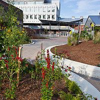 Urban landscaping with native plants.