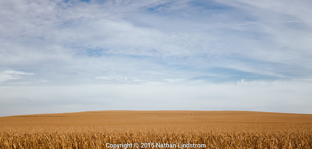 Various farms in Johnson and Iowa County, Iowa. Photographed by editorial photographer Nathan Lindstrom<br />