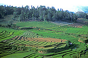 SRI LANKA, AGRICULTURE rice terraces in the southern highlands