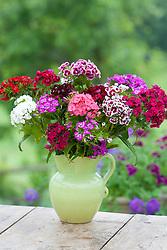 Sweet william flower arrangement in green jug. Dianthus barbatus