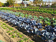 Centennial Farm Demonstration Garden At OC Fair And Event Center