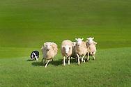 Rhonda;sheep;dogs;bikes;windmill;trees