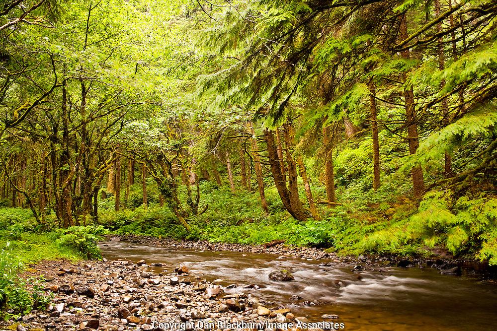Rock Creek Flows Through the Siuslaw National Forest Near the Oregon Coast