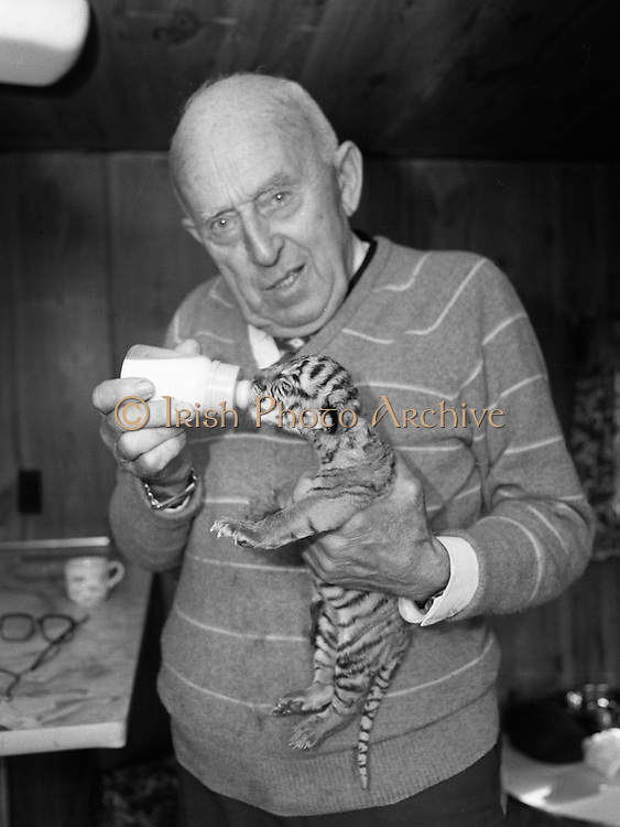 08.09.1984<br /> 09.08.1984.<br /> 8th September 1984.<br /> Chipperfield's circus performed before packed houses in Mullingar, Co Westmeath.<br /> <br /> Picture shows Mr Dick Chipperfield with a tiger cub which was born shortly after the circus arrived in town. The cub was only only about an hour old when this picture was taken. Here Mr Chipperfield is bottle feeding  of the cub.