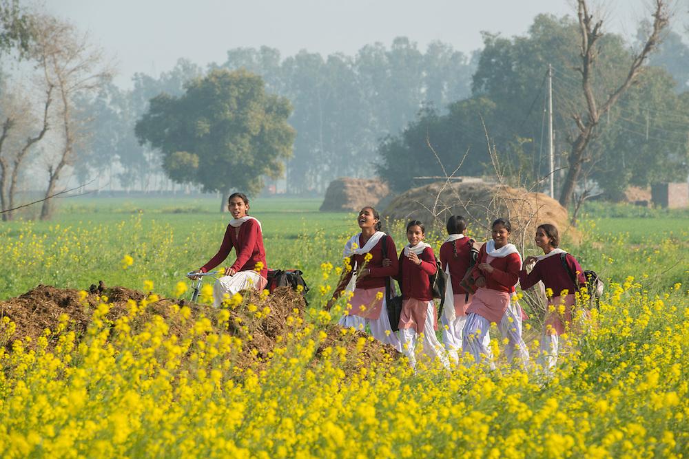 Asia, India, Punjab, Amritsar,school girls walking home through flower meadow