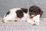 Pet photography, adorable puppy photo, dog, animal portrait. Santa Monica photographer, pet photo session, dog photo shoot, Los Angeles, West LA, California.