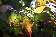 2011 GA Fall Color